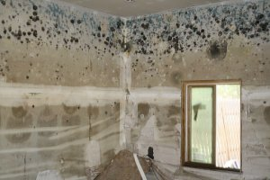 Mold cleaning in Charleston, SC